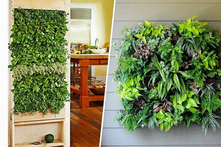 Best 25 Indoor Wall Planters Ideas On Pinterest Herb Wall Indoor Wall  Planters